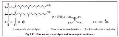 molecular structure of lipids with