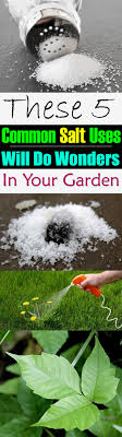 Uses Of Kitchen Garden 5 Uncommon Ways To Use Common Salt In The Garden Balcony Garden Web