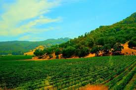 napa and sonoma valley wine country tour from san francisco provided by napa valley wine country tours