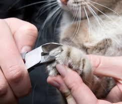 cutting cat s nails