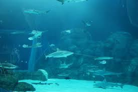 I 10 acquari più straordinari del mondo curiosone