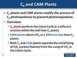 Photosynthesis Part Ii Ppt Download