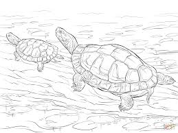 Two Painted Turtles Coloring Page From