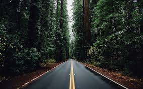 nature, forest, trees, road :: Wallpapers