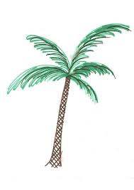 Palm Tree Drawing Tumblr ClipartXtras