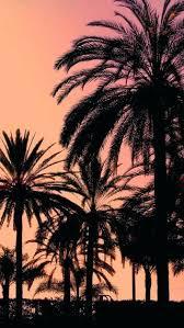 palm trees sunset tumblr. Wallpaper Palm Trees Resolutions Sunset Tumblr .