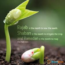 Memorable quotes and exchanges from movies, tv series and more. Rajab Sow The Seeds Shaban Irrigate The Crop Ramadan Reap The Harvest Ramadan Quotes Ramadan Quotes From Quran Ramadan