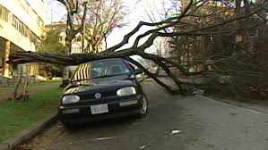 Image result for images of wind storm in Summerland, BC