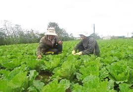 Nông nghiệp bền vững gắn với xây dựng nông thôn mới