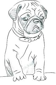 pug coloring pages pug puppy coloring pages puppy printable coloring pages wonderful pug puppy colouring pages