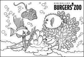 Burgers Zoo Coloring Royal Burgers Zoo