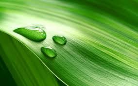 Kết quả hình ảnh cho dew drop on leaf