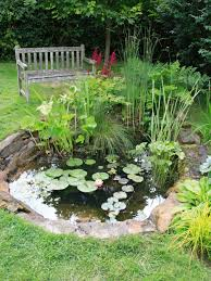 Diy Pond How To Create A Wildlife Pond Hgtv