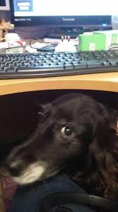 hello this is dog. hello, this is dog hello