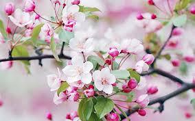 Картинки по запросу printemps