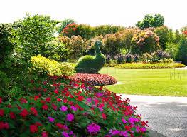 7 11 14 peacock topiary in the jonsson color garden jpg