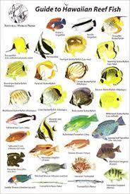 Oahu Fish Chart Guide To Hawaiian Reef Fish Rod Macpherson 9780939560042