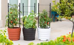 three gardener s victory self watering planter gardens growing tomatoes cubers and peppers