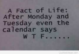 Monday Quotes Funny Best Funny After Monday Calendar Saying By Quotes Ideas