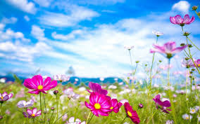 2560x1600 wallpapers for pretty summer flower backgrounds