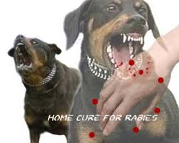 natural remedies home cure for rabies