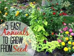 flower seeds to plant in march 5 easy annuals to grow from seed flower seeds plant flower seeds to plant
