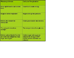 free collection of 30 comparing photosynthesis and cellular respiration worksheet