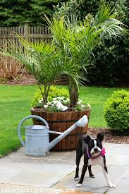 create an outdoor tropical oasis in your backyard with palm trees in giant whiskey barrel planters