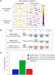Intermittent Stem Cell Cycling Balances Self-Renewal And Senescence ...