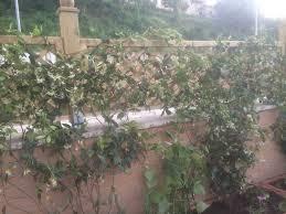 La finestra di stefania consigli giardino archivi la finestra di