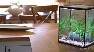 office desk fish tank. Office Desk Fish Tank C