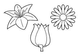 Luxe Kleurplaat Tulp Bloemen Simple Home Decor Ideas
