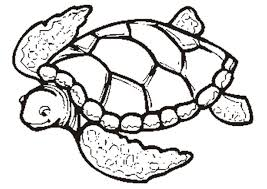 Cute Sea Turtle Coloring Pages New Free Turtle Outline Download Free