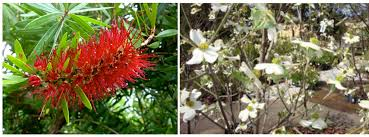ws flowering trees