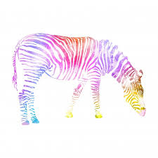 zebra watercolor painting colorful