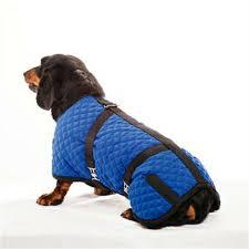 Quilted Horse Blanket Dog Coat Blue Size 20