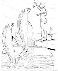 Lavishly Dolphin Coloring Pages Timykids Valence Dolphin Coloring