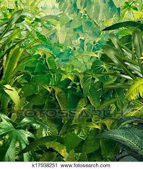 jungle background clipart. Simple Clipart Tropical Jungle Background With Rich Green Plants As Fauna Ferns  And Palm Tree Leaves Found In Rain Forest Warm Environments Southern Hot  Inside Jungle Background Clipart N