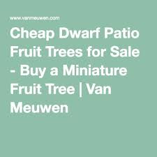 Amazoncom  HEIRLOOM NON GMO Celeste Fig 10 Seeds  Garden U0026 OutdoorNon Gmo Fruit Trees For Sale