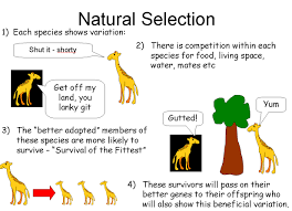 what are the objections to theory of evolution by natural selection  natural selection