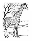 Картинка для раскраски жираф