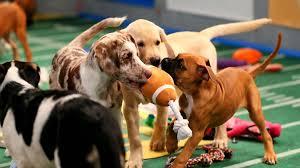 puppy bowl. Unique Puppy Puppybowl020516animalplanetftrjpg With Puppy Bowl Sporting News