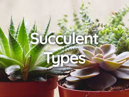 20 types of succulent plants with