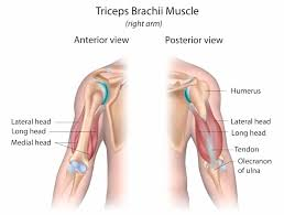 If you want big arms it's time to give your triceps some love. 7 Best Long Head Tricep Exercises For Big Arms