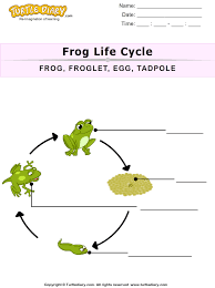 together with Stages of Frog Life Cycle Worksheet   Turtle Diary as well Frog Clipart  Charts   Worksheets moreover Preschool Printables  Frog Life Cycle   Pond Theme   Pinterest furthermore Life Cycle Of A Frog Worksheets Free Worksheets Library   Download moreover  in addition  further  moreover 25 Easy Frog and Toad Ideas and Activities   Teach Junkie as well Life Cycle of a Plant FREEBIE from The Kinder Cupboard   Classroom together with 13 Frog Life Cycle Resources and Printables   Teach Junkie. on kindergarten frog life cycle worksheet