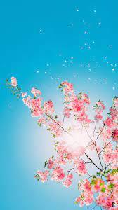 wallpaper: Iphone X Flower Wallpaper Hd