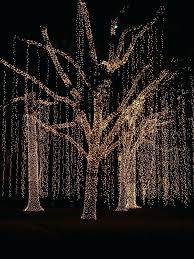 outdoor tree lighting ideas. Best Outdoor Tree Lighting Ideas On Lights In Christmas Cascading Trees Diy Wall S