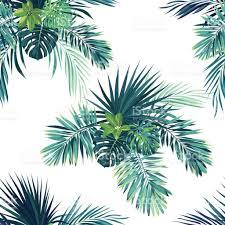 Fond Tropicale Avec Des Plantes De Jungle Feuilles De Mod Le
