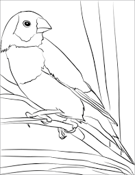 Free printable coloring pages for kids! Finch Coloring Purple Finch Coloring Page Free Printable Coloring Pages Carson Abimillepattes Com
