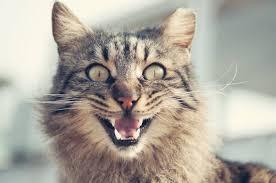 Katzenbilder Lustig Mit Spr Hen Spruchwebsite